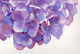 Hydrangea flowers in aquarel