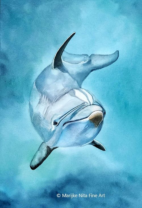 Bottlenose dolphin in aquarel