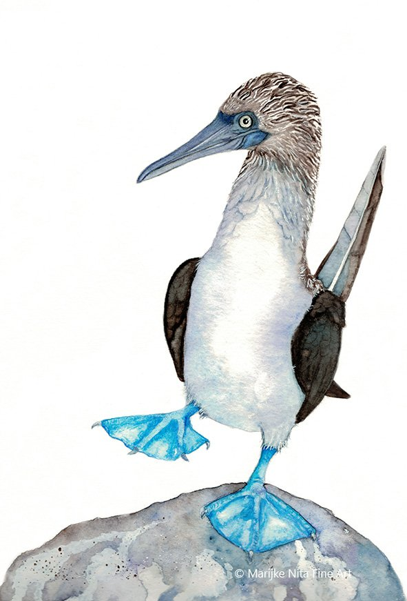 Blue-footed booby in aquarel