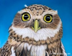 Burrowing Owl in pastel