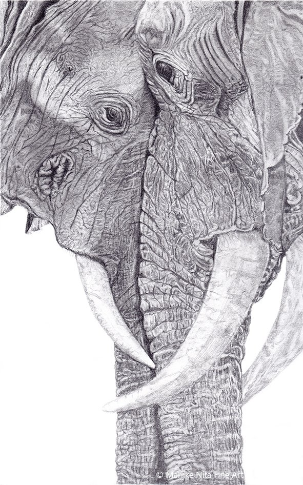 Elephants in graphite