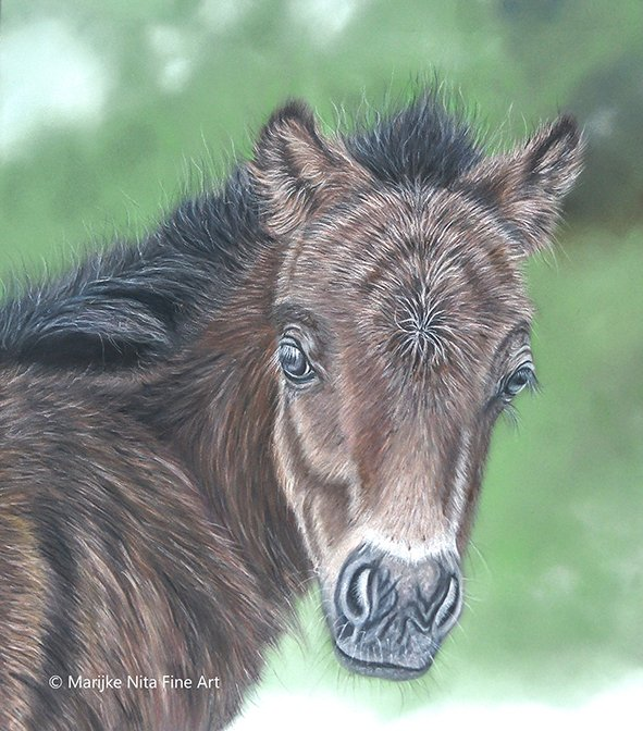 Foal in mixed media