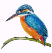Kingfisher in aquarel