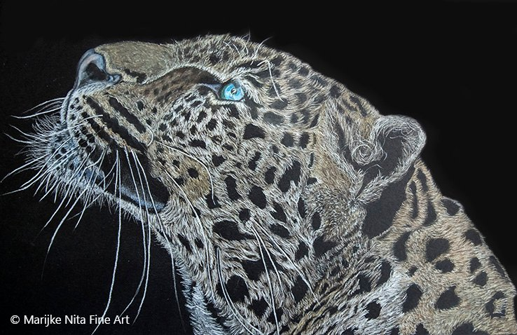 Leopard in colour pencils