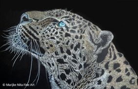 Leopard in colour pencil