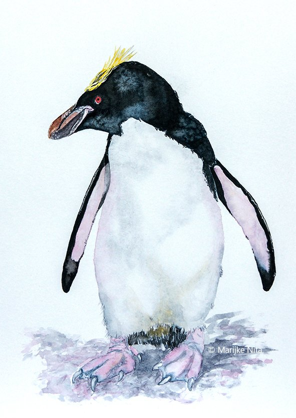 Macaroni penguin in aquarel