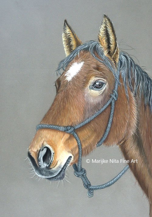 Horse in mixed media
