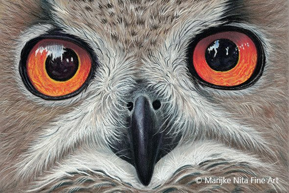 Cape Eagle Owl in pastel