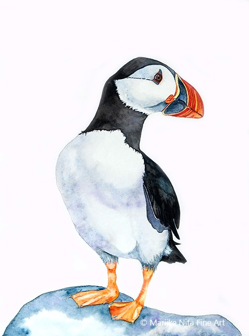 Puffin in aquarel