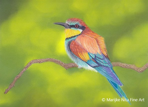 beeeater in mixed media